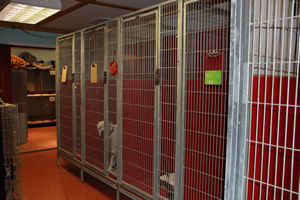 Dog, cat, and pet boarding, we have large cages to accomidate your pet boarding requirements.