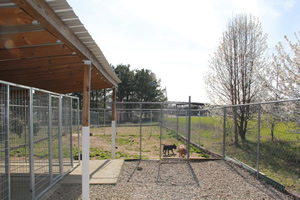 Dog, cat, and cat boarding, we have over 6100 square feet of outside play area for your pet.