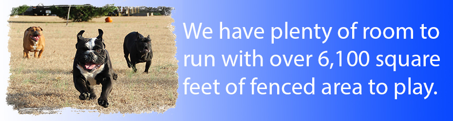 Dog and pet boarding, we have over 6100 squre feet of outdoor play area.